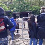 Kleine und große Pferde gab es zu besuchen beim Tag der offenen Tür beim KJRFV Zehlendorf e.V.